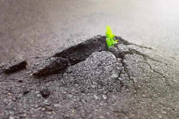¿Es la persistencia la clave del éxito empresarial?
